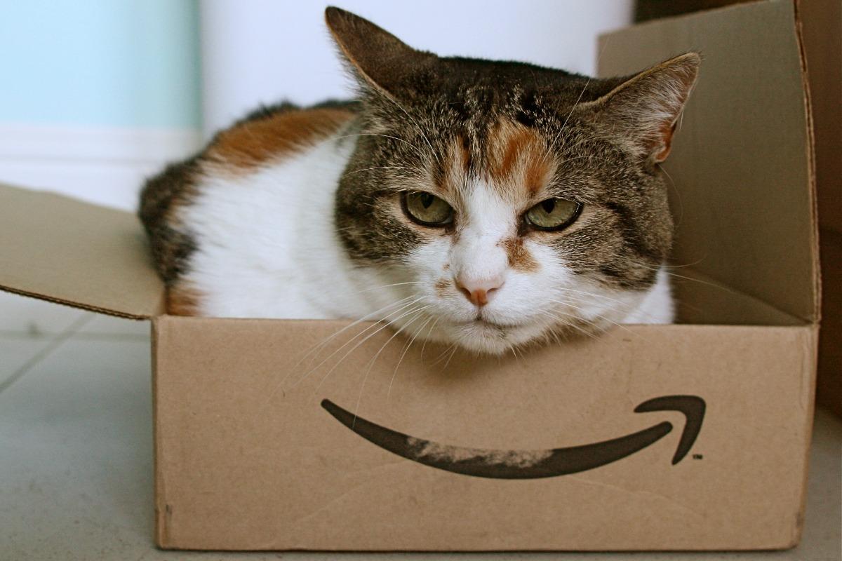 Amazon cat [Flickr/Stephen Woods]