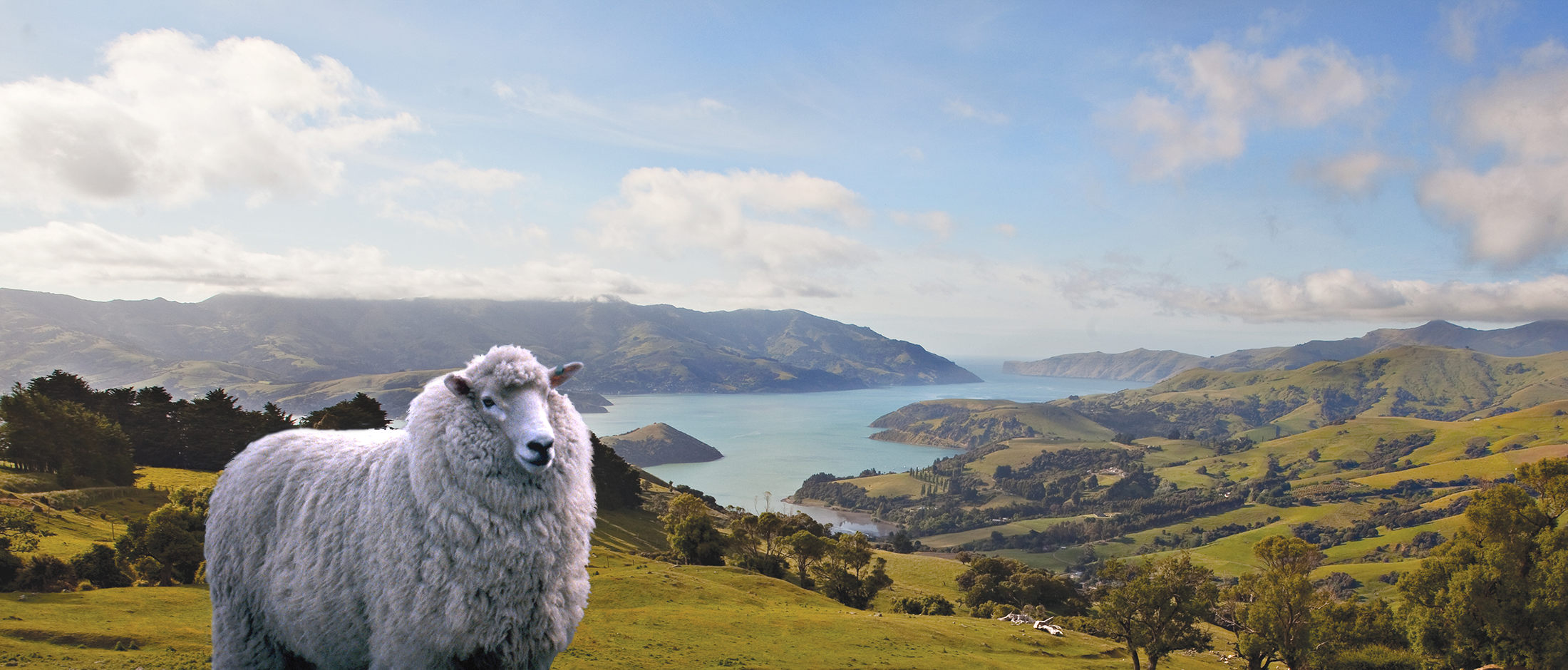 New Zealand News Wallpaper: New Zealand, The Unexpected Trade Partner For The EU