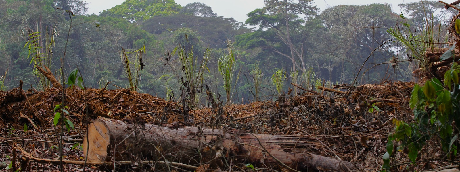 rainforest depletion caused by logging thesis Download thesis statement on rainforest in our database or order an original thesis paper that will be written by one of our staff writers and delivered according to.