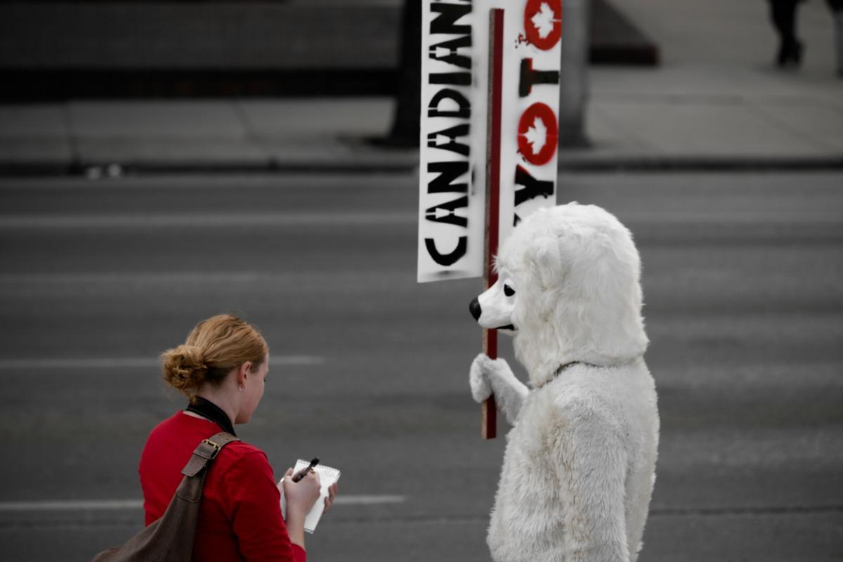 Reporter interviewing polar bear