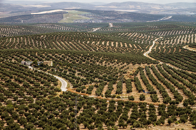 New tariffs on Spanish olives indicate US protectionist trend – EURACTIV.com