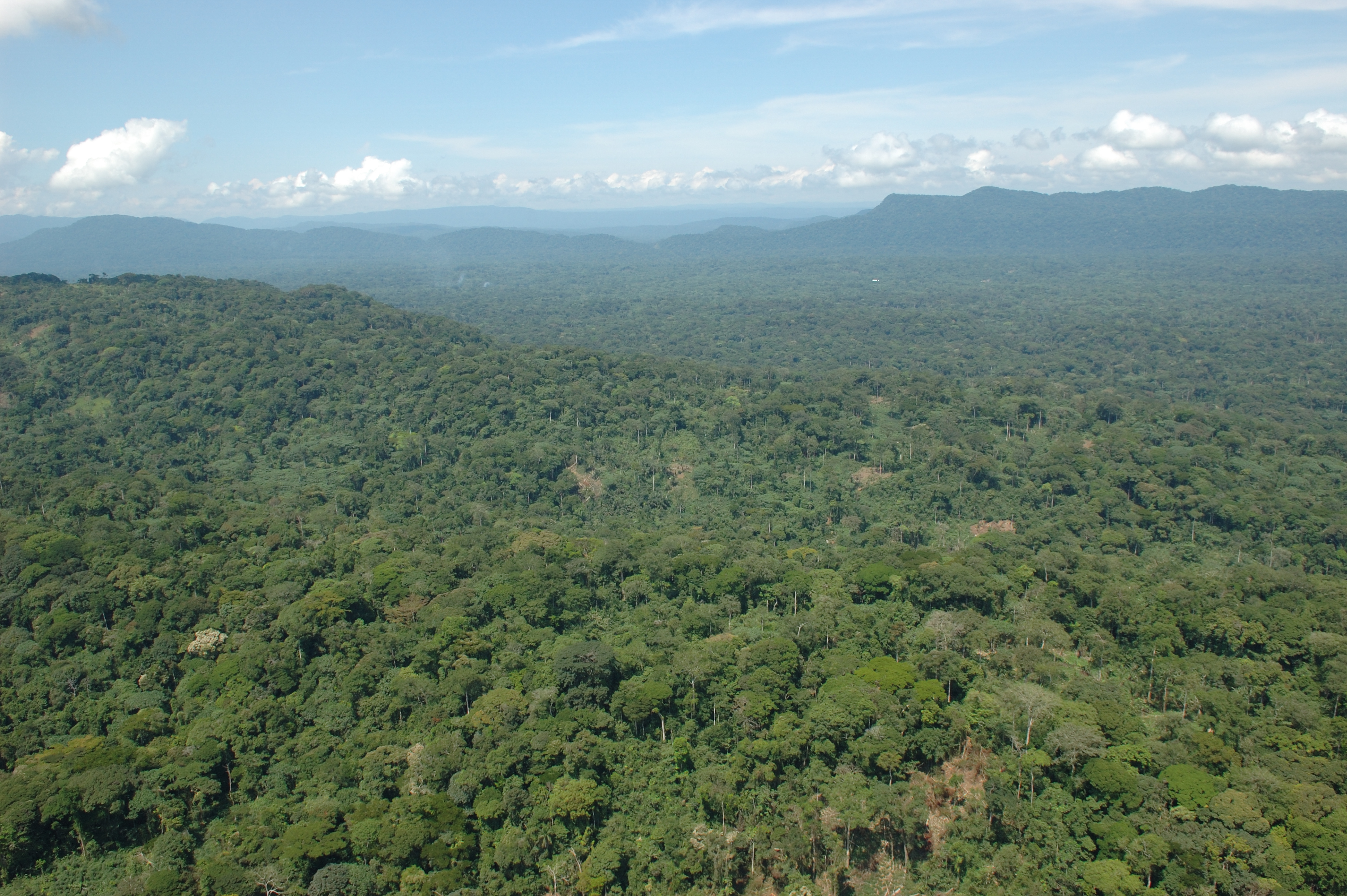 the congo tropical rainforest of africa Central africa almost 80 percent of africa's rainforest is in the congo basin, the largest rainforest in the world after the amazon of this forest, two-thirds is within the democratic republic of congo, but it also covers gabon, central african republic, republic of congo, cameroon and equatorial guinea.
