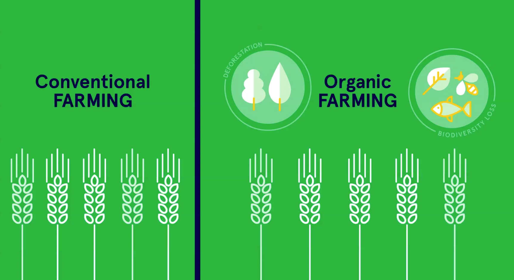 Organic farming in the EU