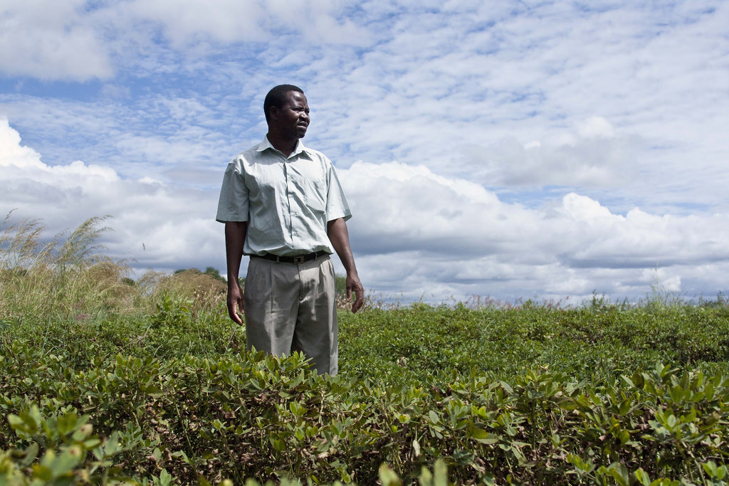 A small setback for intensive agriculture in Africa – EURACTIV com