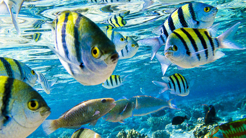 Fisheries for Fish on energy