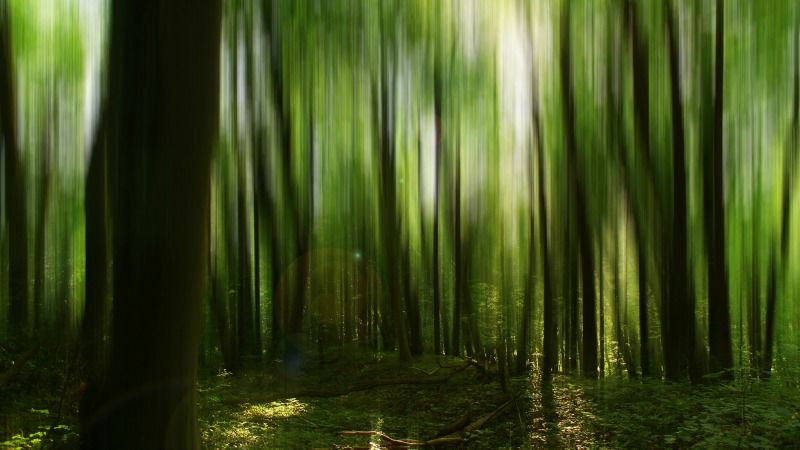 Forest accounting rules put EU's climate credibility at risk