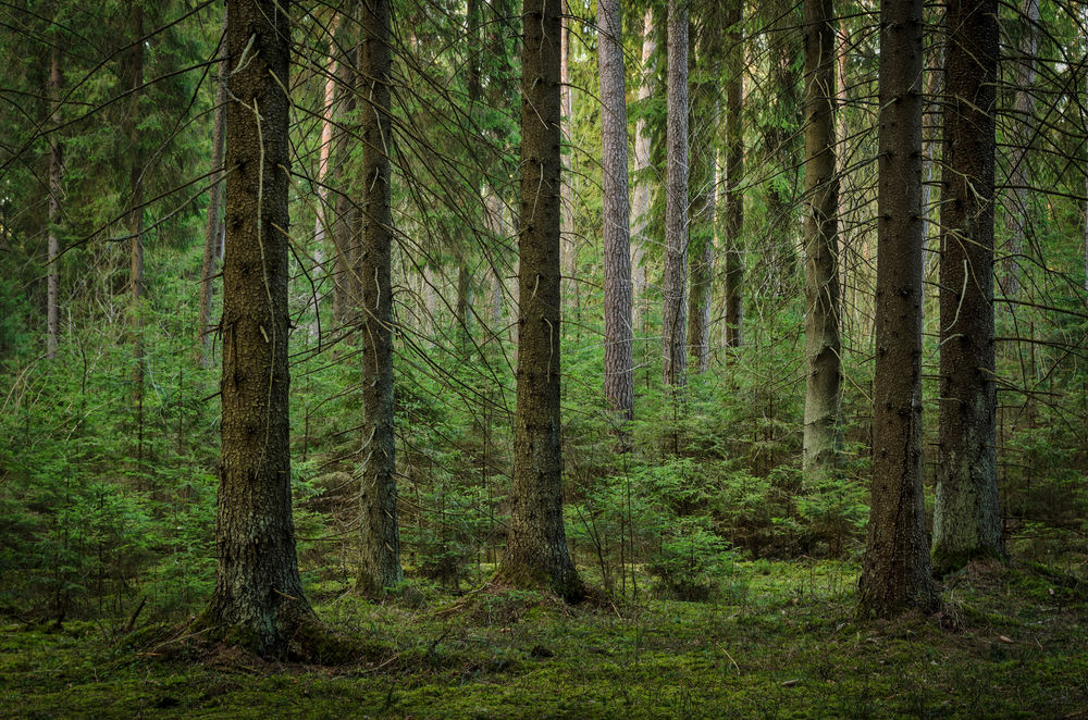 Short Term Views On Forest Climate Benefits Is A Mistake