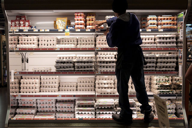 Dutch and Germans 'massively' get rid of contaminated eggs