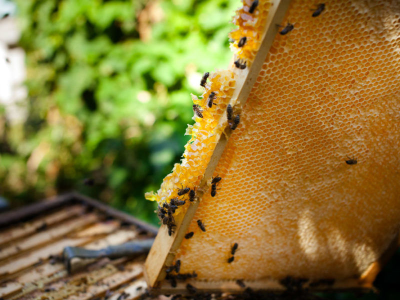 Honeygate: How Europe is being flooded with fake honey