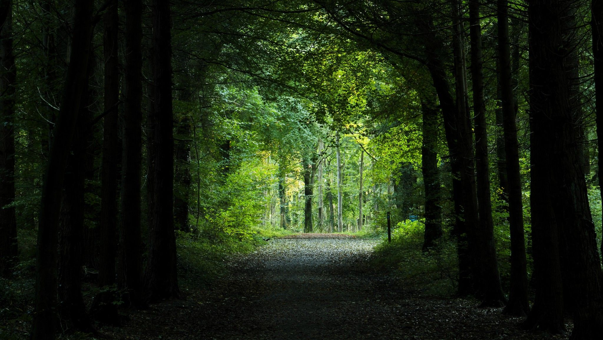 European Single Market >> Will the European Parliament take the high road on climate and forests? – EURACTIV.com