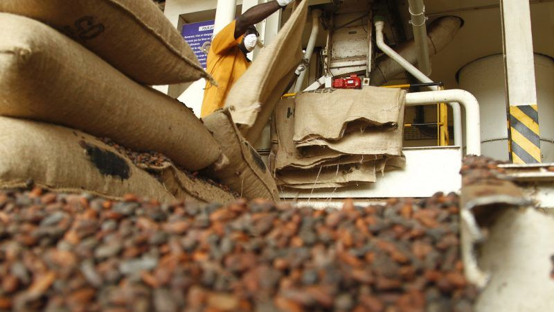 Ivory Coast Cocoa Sector Hit By Certification Fraud Euractiv