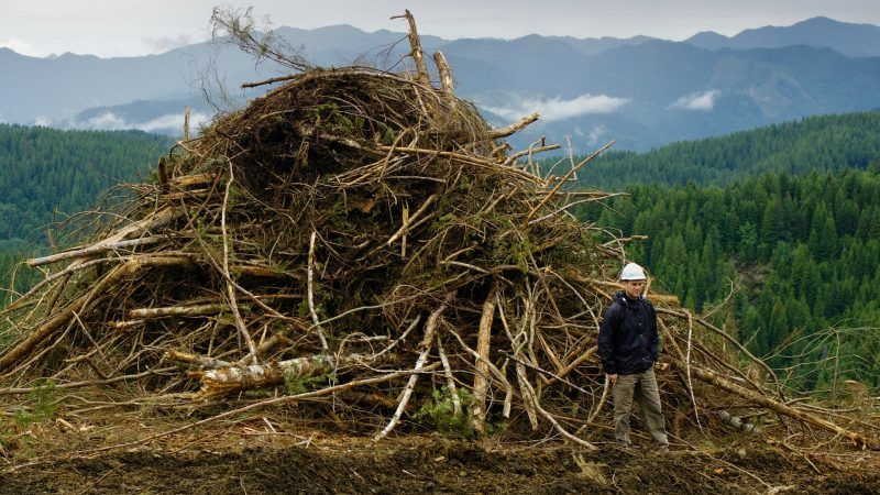 Bioenergy At The Centre Of Eu Renewable Energy Policy