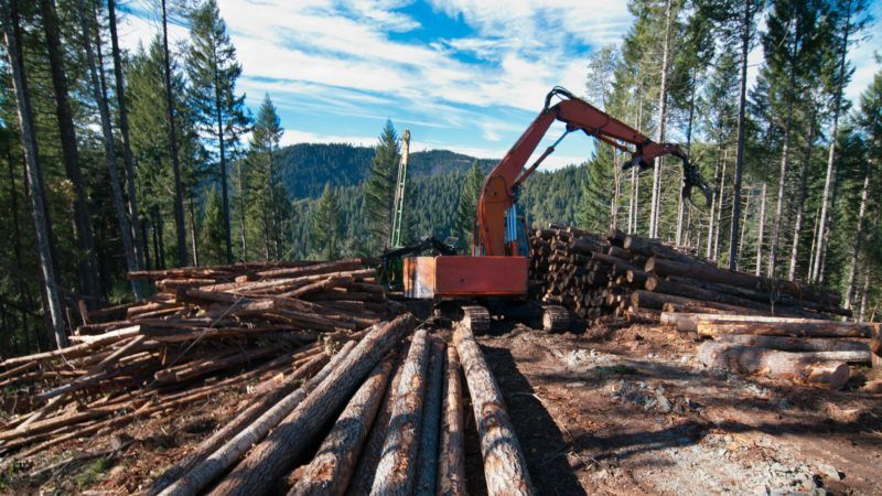 e8954782f9a347 It is true that cutting down trees today creates additional capacity for  trees to grow in the future. But this refilling unfortunately takes a long  time and ...
