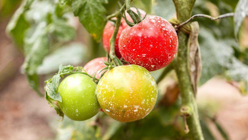 EU renews toxic pesticide amid safety uncertainty – EURACTIV com