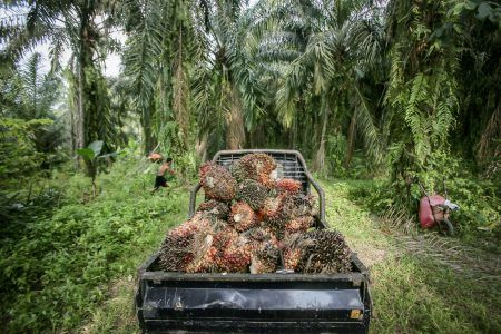 Palm oil ban on the ropes as Commission weighs options