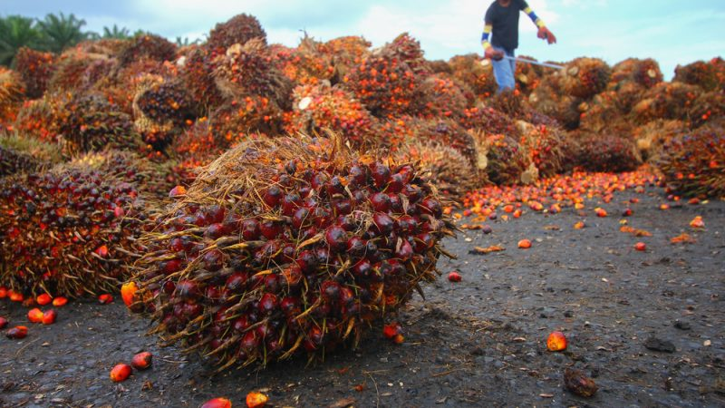 Biofuels: Commission blacklists palm oil, throws soybeans