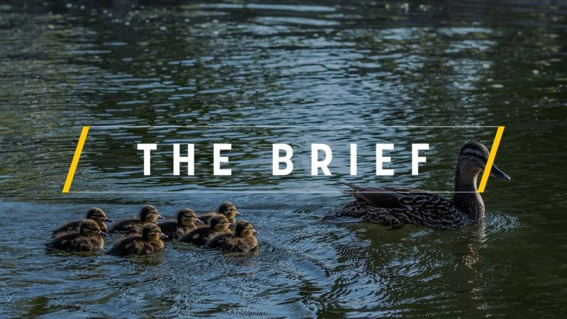 The Brief – Berlaymont's rumour mill – EURACTIV com