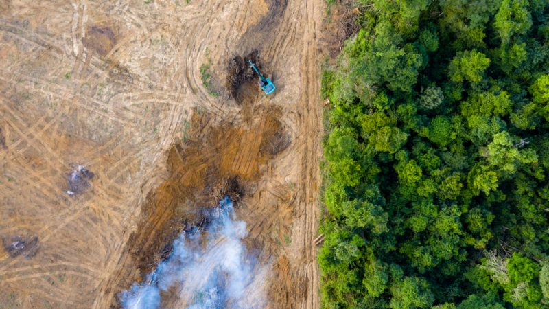 Forest protection likely to be new priority for EU Parliament