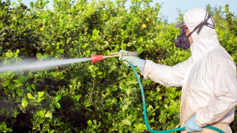 EU protiv pesticida koji sadrže hlorpirifos i hlorpirifos-metil