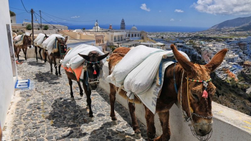 Activists Call On Greek Government To Finally Ban Donkey Taxis Euractiv Com Bank of the philippine islands (swift no. finally ban donkey taxis