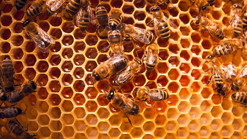 Image de couverture de Honeybees & Beekeepers, Information.