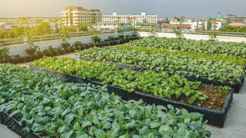Urban Farming: Are rooftop fields the future?