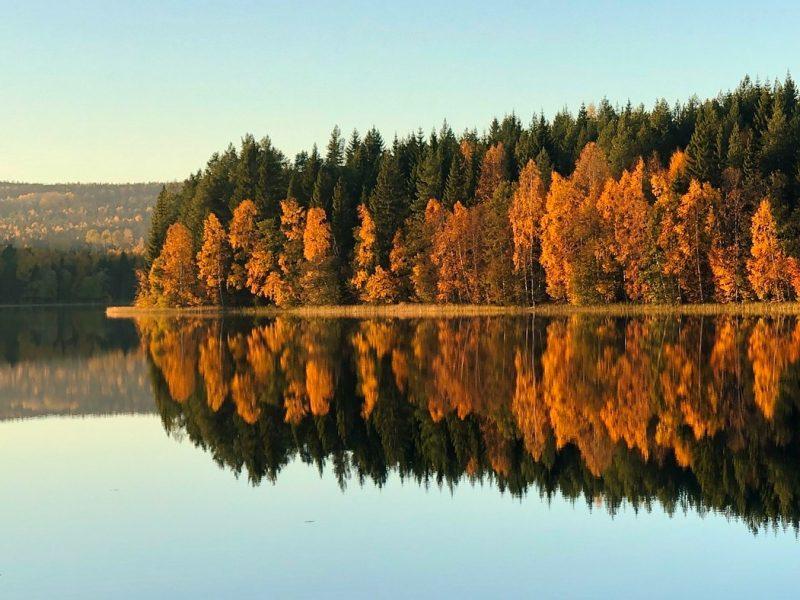 Sweden forest