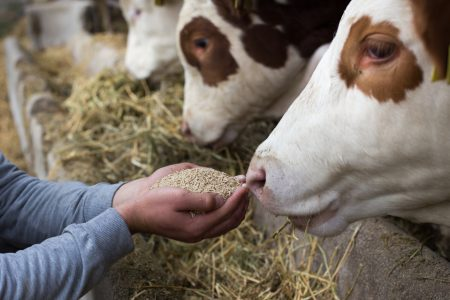 Feed additives 'key tool' in achieving farming sustainability goals, say stakeholders