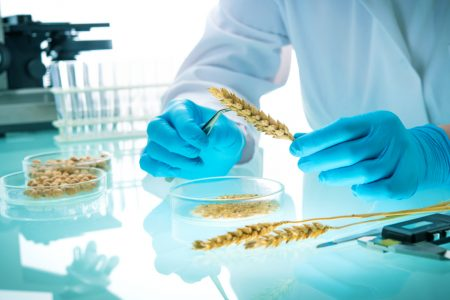 Plant breeding sector split over potential of patenting to spur innovation