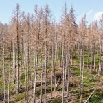 euractiv.com - Lukas Scheid - Our forests are sick,' Germany's agriculture minister says
