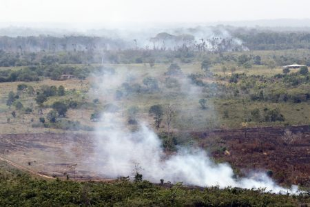EU plans mix of mandatory and voluntary rules to tackle deforestation